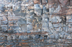 Nahaufnahme des versteinerten Holzes Lizenzfreie Stockbilder