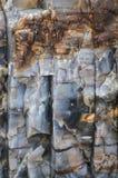 Nahaufnahme des versteinerten Holzes Stockfoto
