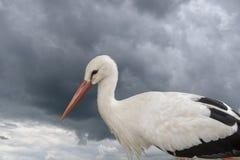 Nahaufnahme des weißen Storchs im Park vor bewölktem Himmel Stockfotos
