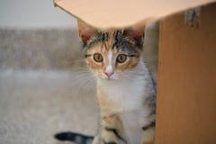 Nahaufnahme des weiblichen Kalikos Kitten Hiding Behind Cardboard Box, schmale Schärfentiefe Lizenzfreie Stockfotografie