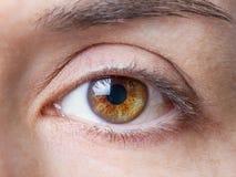 Nahaufnahme des weiblichen natürlichen braunen Auges ohne Make-up Stockbilder