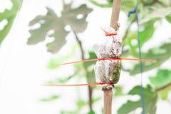 Nahaufnahme, die Baumast mit Naturhintergrund verpflanzt lizenzfreies stockbild