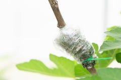 Nahaufnahme, die Baumast mit Naturhintergrund verpflanzt lizenzfreies stockfoto
