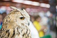 Nahaufnahme die Eule war Zeigung in der Tiermesse Lizenzfreie Stockfotos