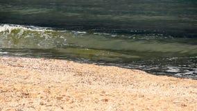 Nahaufnahme ein Seestrand stock footage