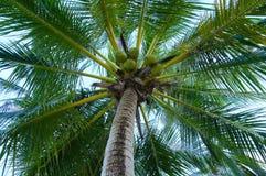Nahaufnahme einer üppigen Palme Stockfotos