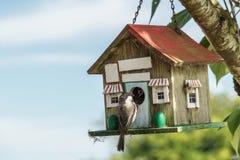 Nahaufnahme einer blauen Meise an einem Vogelhaus Lizenzfreie Stockfotografie