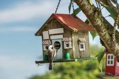 Nahaufnahme einer blauen Meise an einem Vogelhaus Stockfotografie