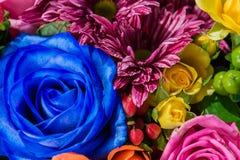 Nahaufnahme einer blauen Rose, der Chrysantheme und der Strauchrose in einem bouqu Stockbilder