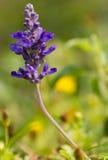 Nahaufnahme einer Blume stockfotografie