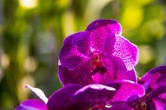 Nahaufnahme einer Blume stockbilder