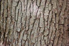 Nahaufnahme einer braunen Baumrinde Lizenzfreie Stockbilder