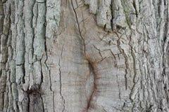 Nahaufnahme einer braunen Baumrinde Stockfoto