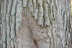 Nahaufnahme einer braunen Baumrinde Lizenzfreies Stockfoto