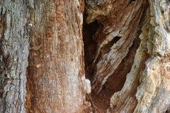 Nahaufnahme einer braunen Baumrinde Lizenzfreie Stockfotos