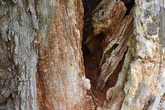 Nahaufnahme einer braunen Baumrinde Lizenzfreies Stockbild