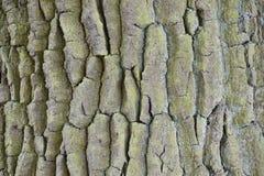 Nahaufnahme einer braunen Baumrinde Stockfotos