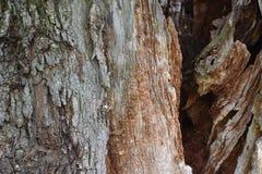 Nahaufnahme einer braunen Baumrinde Lizenzfreie Stockfotografie
