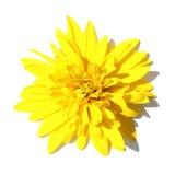Nahaufnahme einer gelben Blume Stockbild