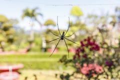 Nahaufnahme einer großen Spinne auf einem Netz stockfotografie