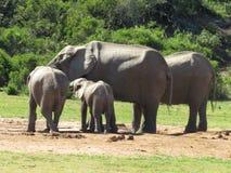 Nahaufnahme einer kleinen Elefantherde Stockfoto