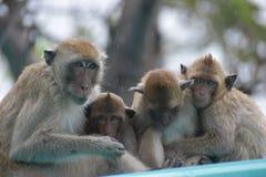 Nahaufnahme einer netten Affefamilie am Affeberg Khao Takiab in Hua Hin, Thailand, Asien Stockbilder