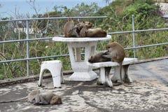 Nahaufnahme einer netten Affefamilie auf einer Tabelle am Affeberg Khao Takiab in Hua Hin, Thailand, Asien Stockfotografie