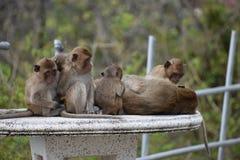 Nahaufnahme einer netten Affefamilie, die auf einer Tabelle am Affeberg Khao Takiab in Hua Hin, Thailand, Asien sitzt Stockbilder