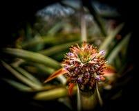 Nahaufnahme einer schönen tropischen exotischen Anlage auf einem Gebiet stockfotos