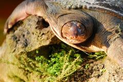 Nahaufnahme einer Schildkröte Stockfotografie