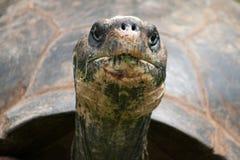 Nahaufnahme einer Schildkröte, die Gras isst stockfotografie