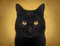 Nahaufnahme einer schwarzen Katze, welche die Kamera betrachtet Stockbilder