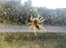Nahaufnahme einer Spinne auf Fenster Lizenzfreie Stockbilder