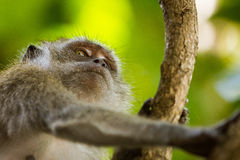 Nahaufnahme eines Affen auf einem Baum Lizenzfreie Stockfotografie