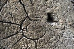 Nahaufnahme eines Baumstumpfkernes Lizenzfreie Stockbilder