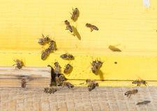 Nahaufnahme eines Bienenstocks Stockfotografie