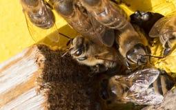 Nahaufnahme eines Bienenstocks Lizenzfreies Stockfoto