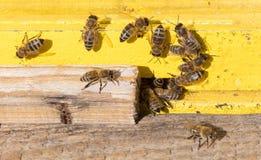 Nahaufnahme eines Bienenstocks Stockfoto