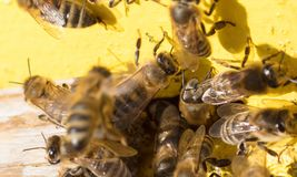 Nahaufnahme eines Bienenstocks Lizenzfreie Stockfotografie