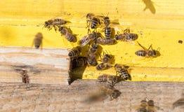 Nahaufnahme eines Bienenstocks Lizenzfreie Stockfotos