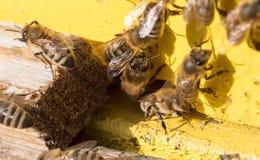 Nahaufnahme eines Bienenstocks Stockbilder