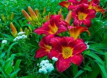 Nahaufnahme eines Blumenbeets mit Lilien im Garten Lizenzfreie Stockbilder