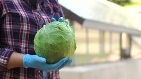 Nahaufnahme eines Frauenlandwirts in den blauen Handschuhen, die frischen Kohl in den Gewächshäusern halten stock footage
