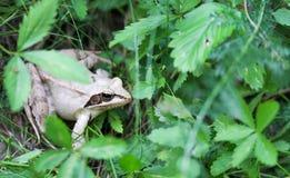 Nahaufnahme eines Frosches Stockbild