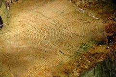 Nahaufnahme eines gefällten Baums Stockbilder