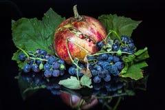 Nahaufnahme eines Granatapfels und der wilden Trauben Lizenzfreie Stockfotografie