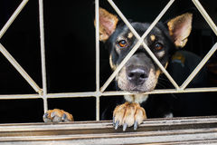 Nahaufnahme eines Hundekäfigs Lizenzfreie Stockfotos