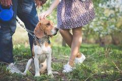 Nahaufnahme eines Hundes Frau und Mann mit ihrem netten Hund im Park Sommerweg mit einem Hund lizenzfreies stockbild