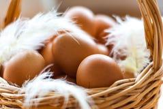 Nahaufnahme eines Korbes mit organischem, Hühnereien und Federn Defo Stockfoto
