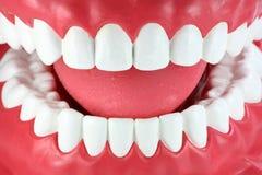Nahaufnahme eines Munds mit den sauberen weißen Zähnen Lizenzfreie Stockfotos